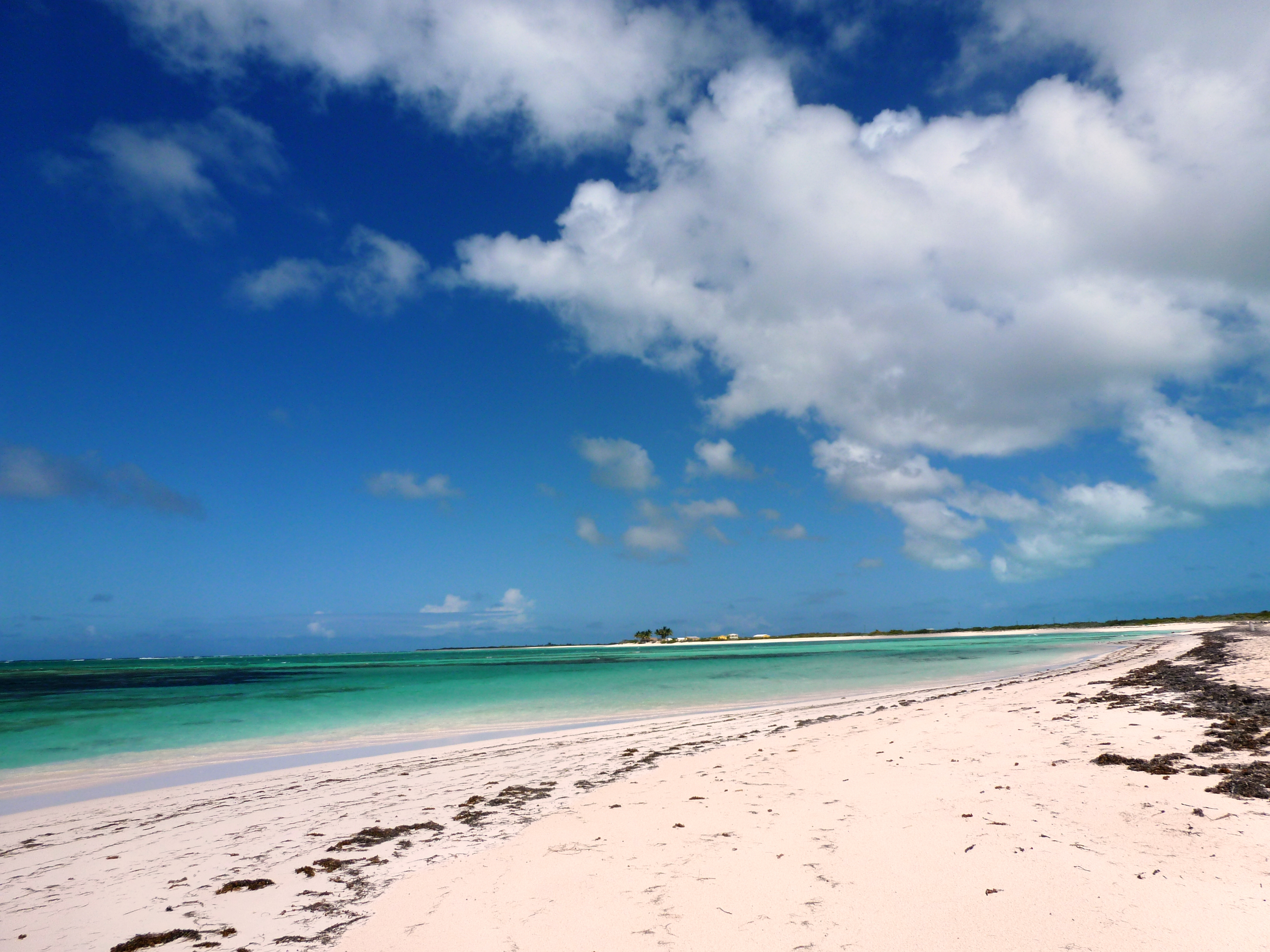Anegada Loblolly Beach in the BVI