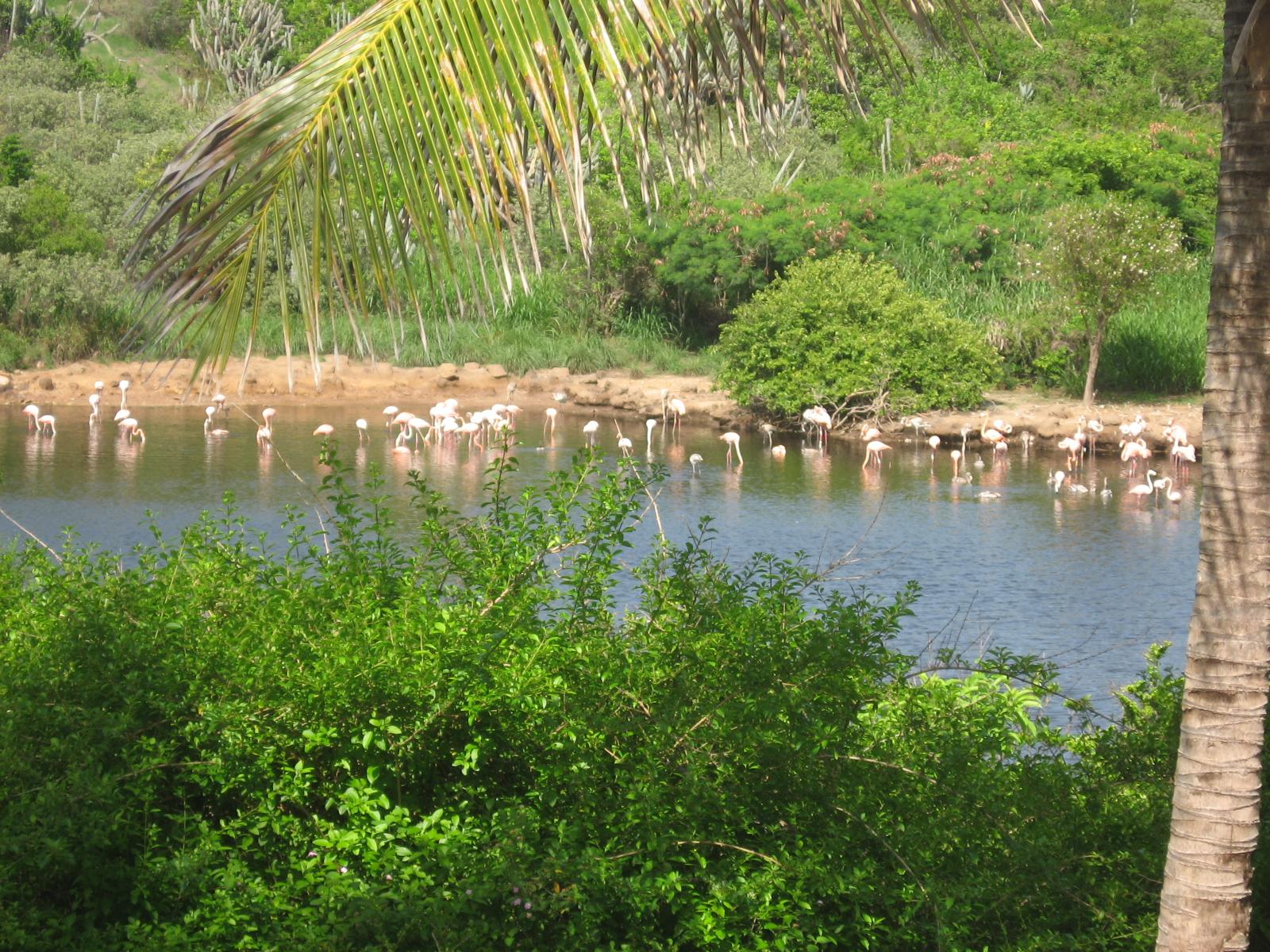 Flamingo Pond, Anegada, BVI